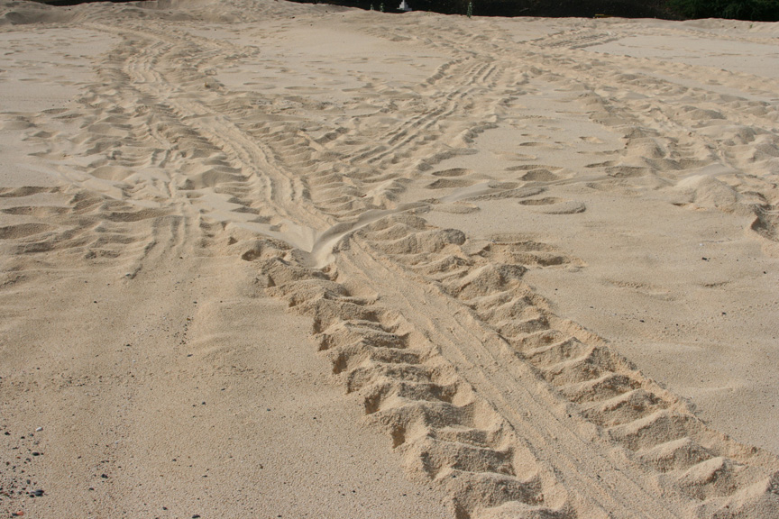 Green sea turtle tracks on the beach in Georgetown