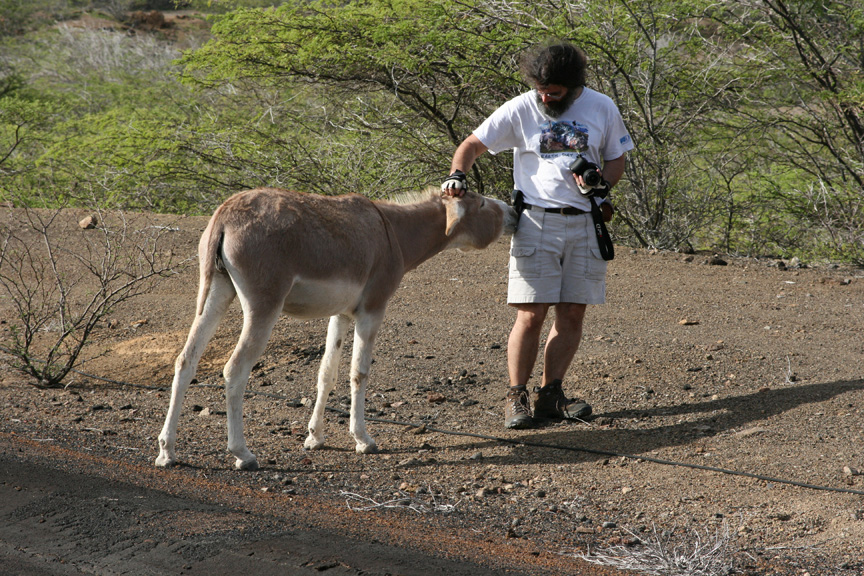 A donkey greets me on a road on Ascension Island