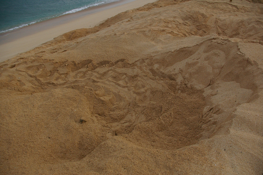 A fresh green sea turtle nest pit